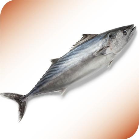Bonito Tuna