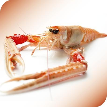 Norvegian Lobster