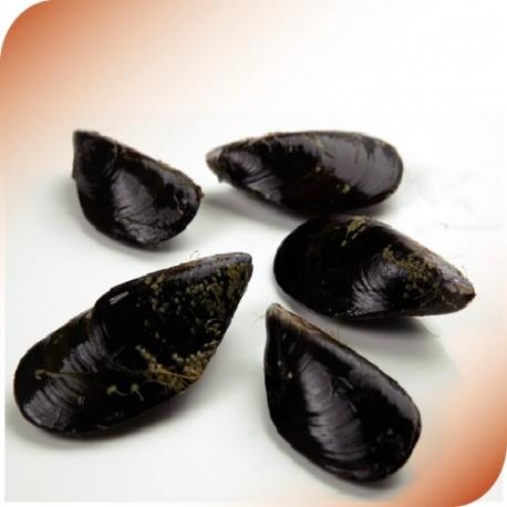 Spanish Mussels
